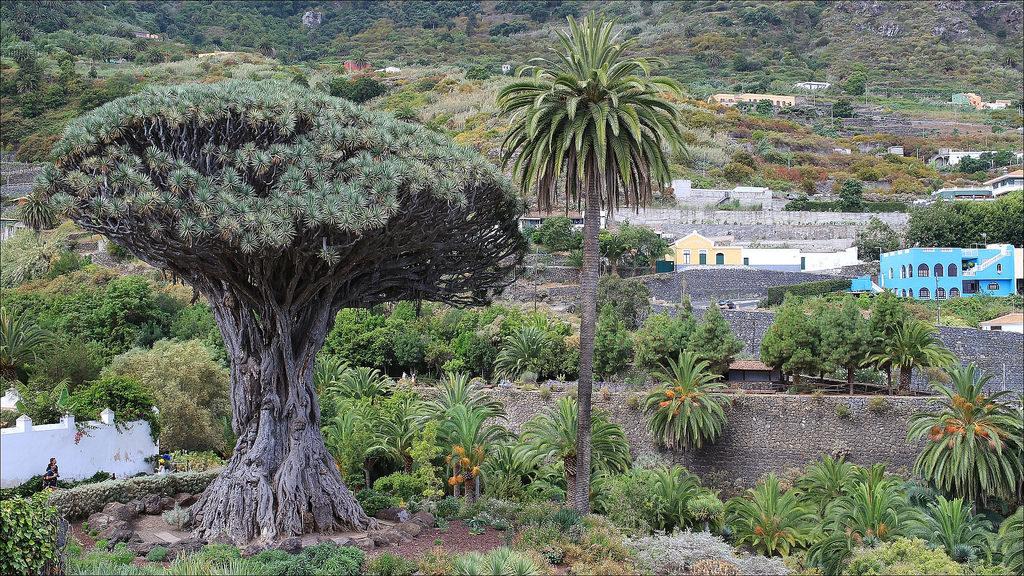 Vakantie naar de canarische eilanden bezienswaardigheden for Botanische tuin tenerife