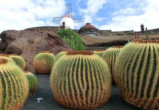 lanzarote-molen-cactus