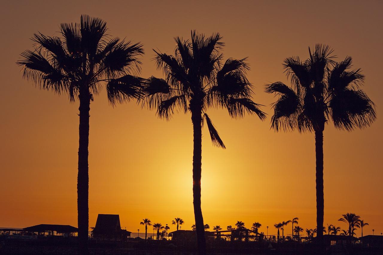 tips-canarische-eilanden-palmboom